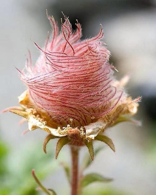 This is a pretty amazing flower! Anyone knows the name of it?