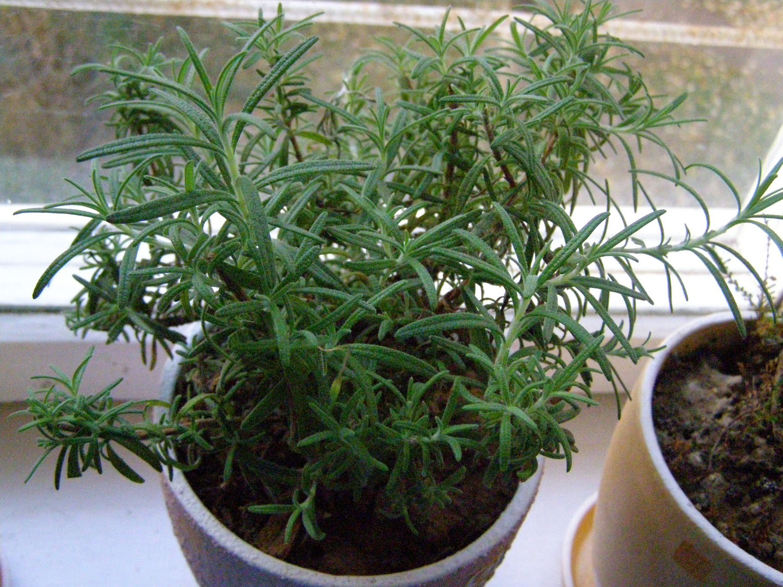 RE: Which herbs would you grow on your windowsill in winter?
