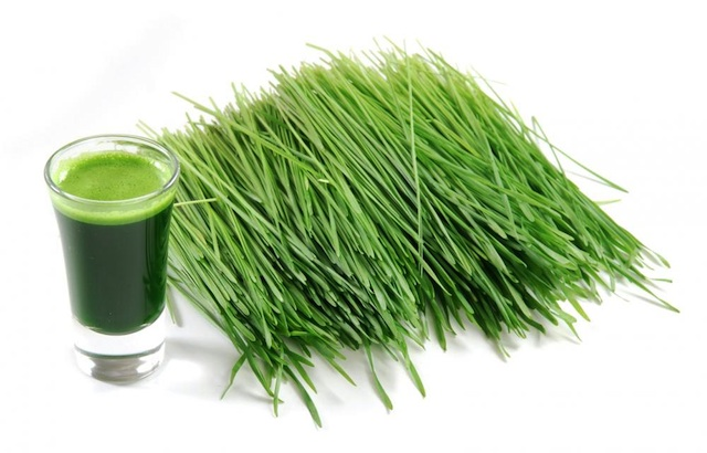 Healthy detox diet - wheatgrass