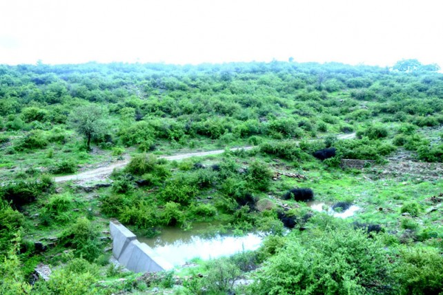 Piplantri village in Rajasthan