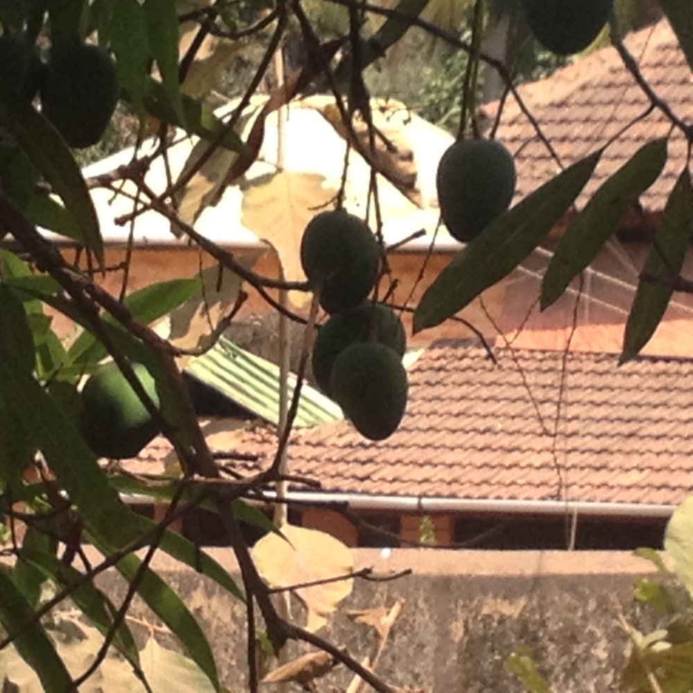 Can you identify this fruit?