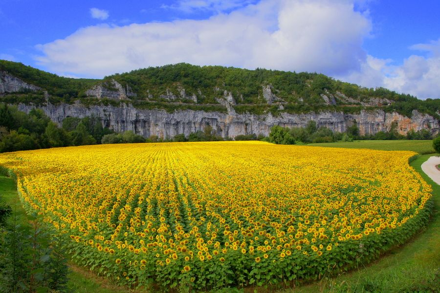 Sunflowers in Dordogne by Joshua Raif