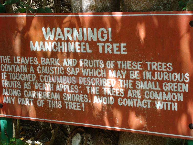 Manchineel tree warning