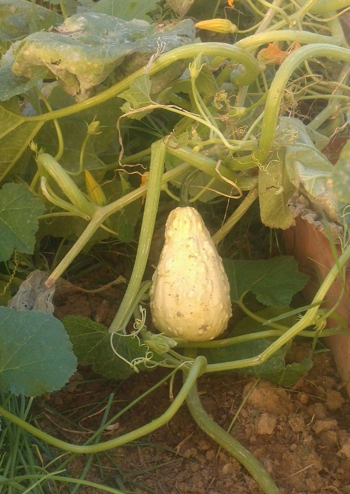 What is this vegetable?