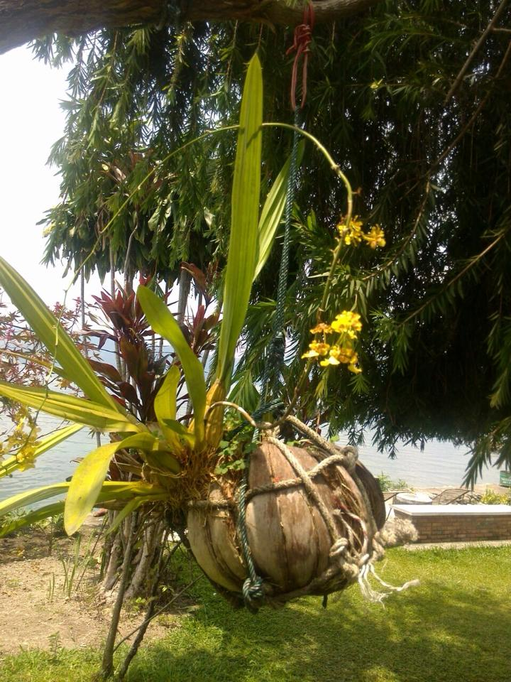 Can you identify this interesting tropical plant?