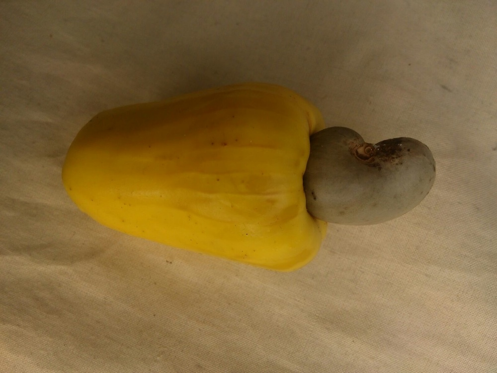 How to eat a cashew fruit?
