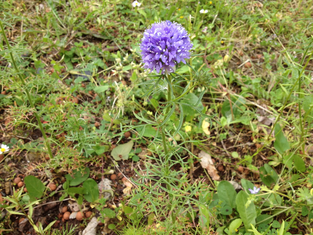 Could you tell me the name of this blue flower?