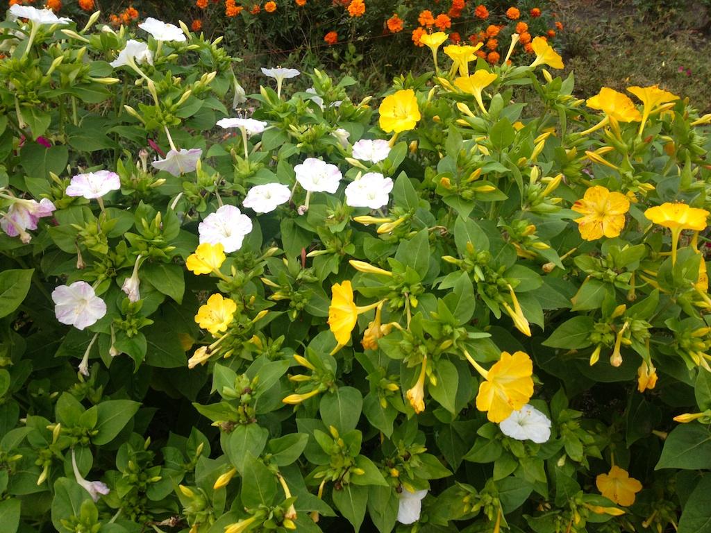 Summer garden flowers name
