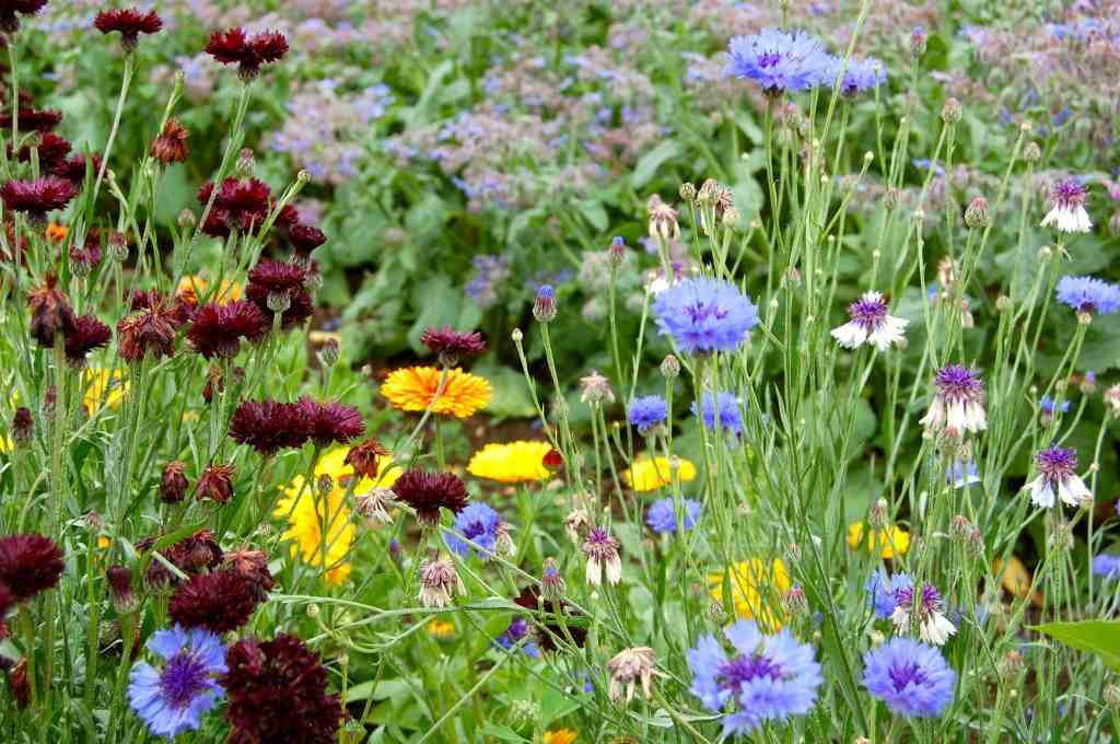Annuals You Should Be Planting In Autumn