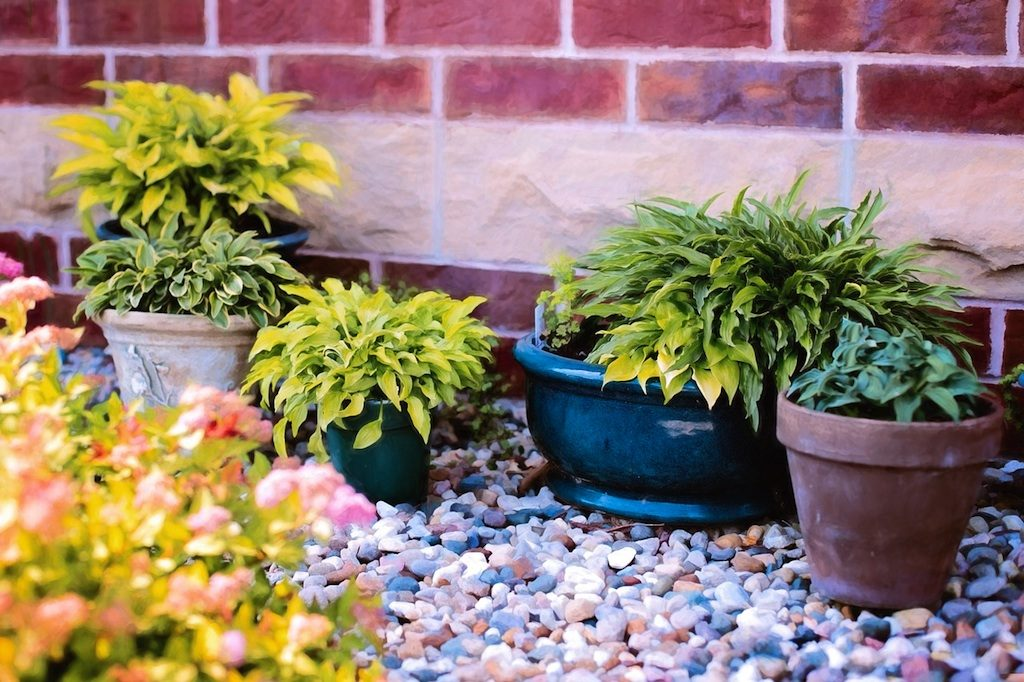 Grow better houseplants and potted plants