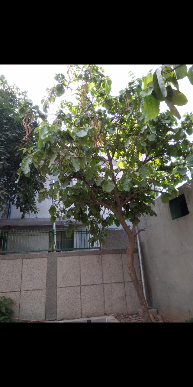 Identify this tree
