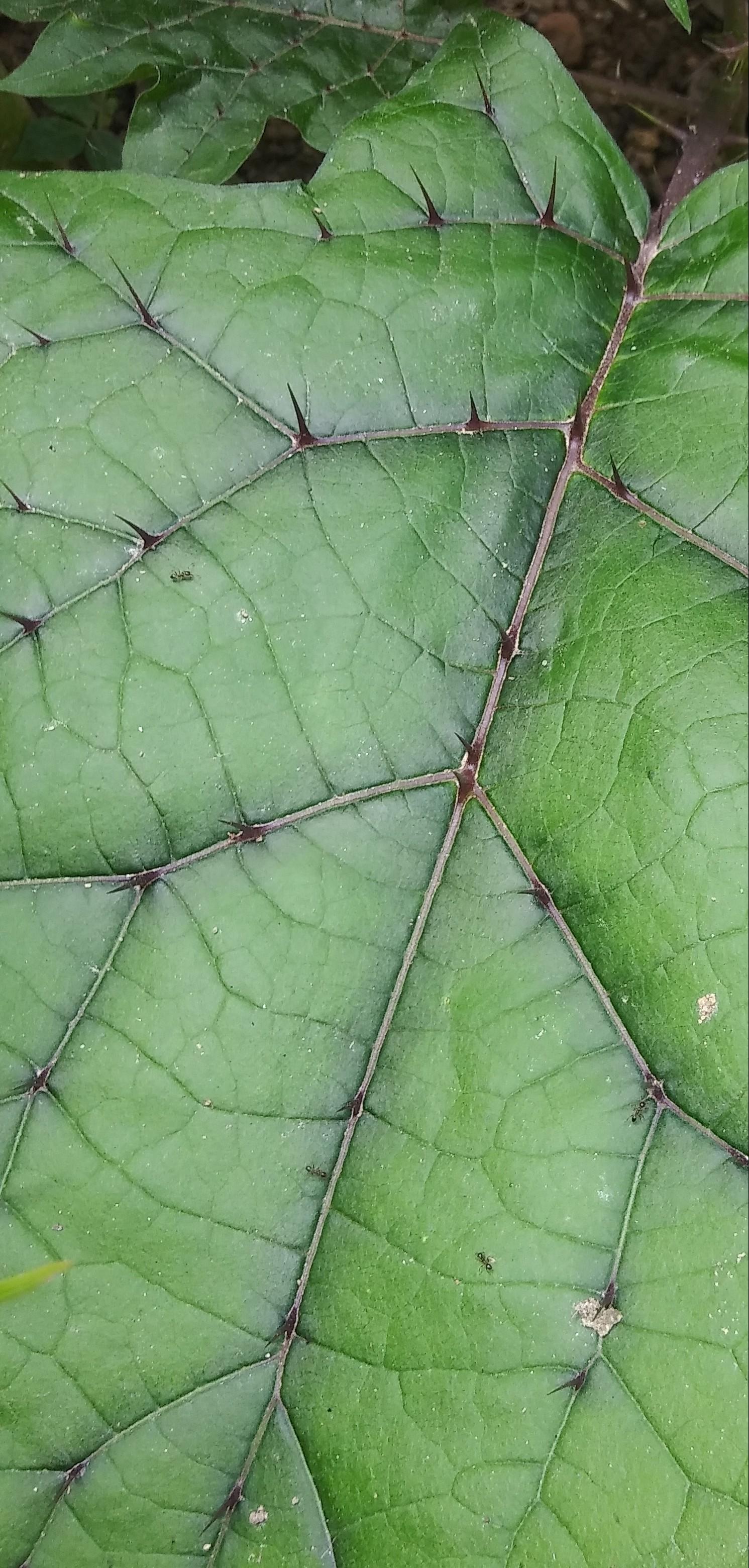Identity plant