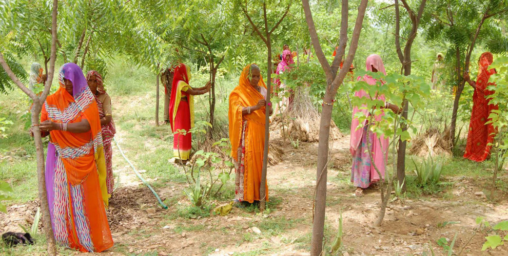 People in This Indian Village Plant 111 Trees Every Time a Girl Is Born