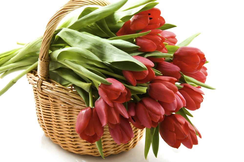 Fresh Cut Spring Flowers Tips