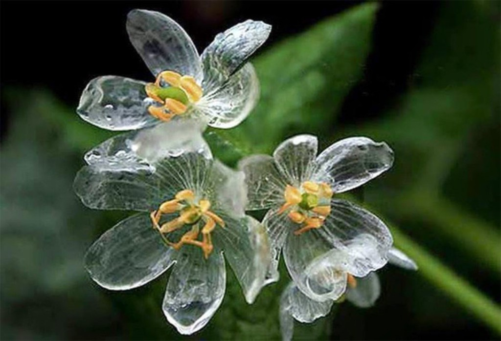 Skeleton Flowers