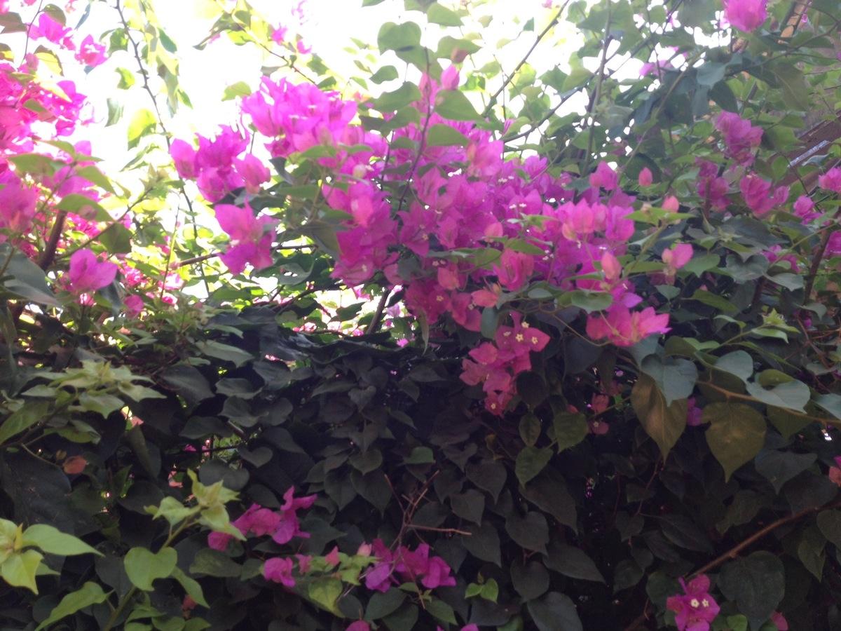 Names Of Pink Flowers Credainatcon