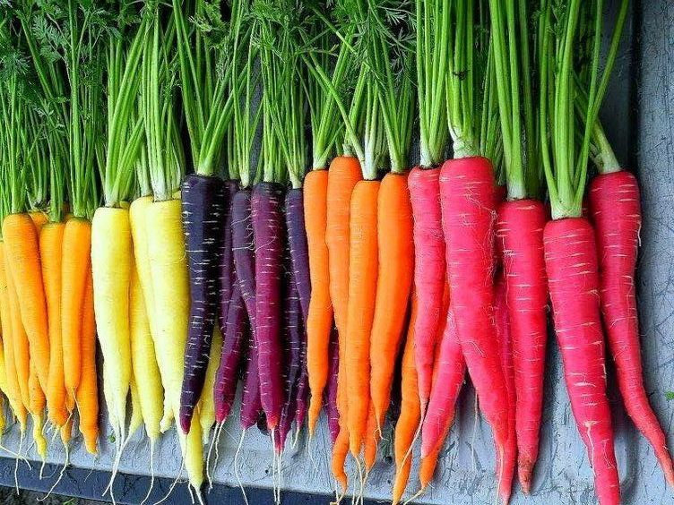 Top 15 Health Benefits of Carrots with Nutrition Facts & Recipes