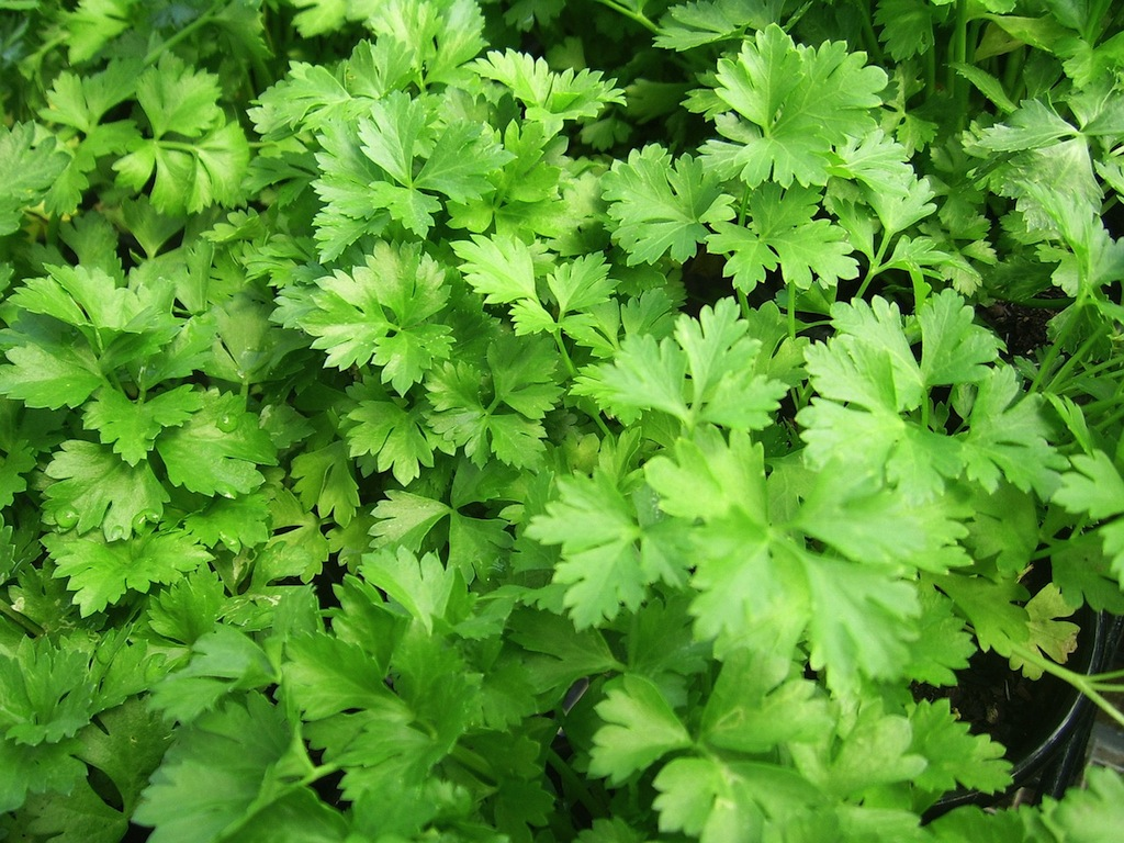 Healthy Herbs for Yummy Salads